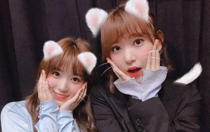 Yabuki Naku - Miyawaki Sakura Akan Ikut Konser HKT48, Penggermar lZ*ONE Merasa Terkhianati